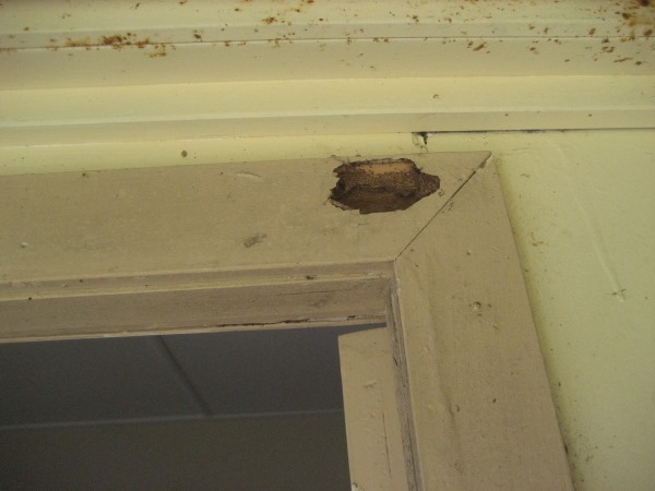 Termite damage located in Window architrave.