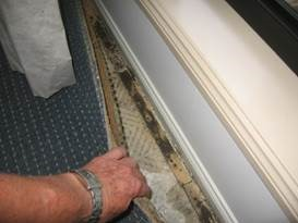 Termite damage found under the Carpet!